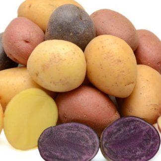 Pommes de terre / Condiments